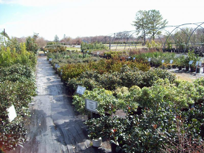Great Deals Want To Know What Is On At The Nursery In Edgewood Tx Just Click Our Newest Tab See Select Plant Material